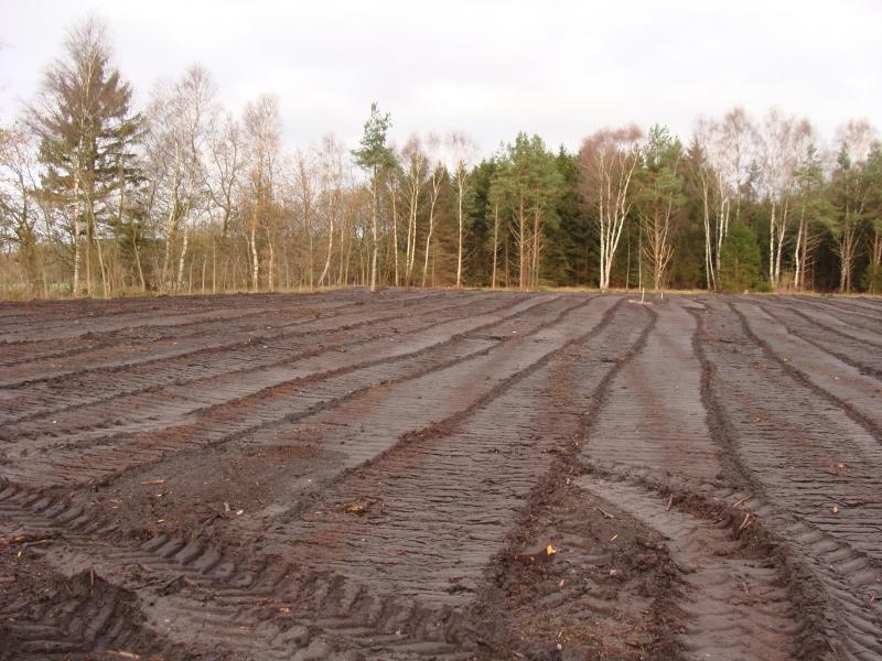 Sporene af skoven er ved at være væk. Set mod nord.