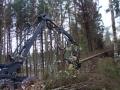 Et ræ er fældet, klar tl afgrening