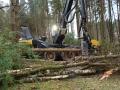 Skovmaskinen afgrener (et træ pr 6-8 sek)