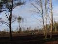 Området set med nordvest med bevarede træer i forgrunden